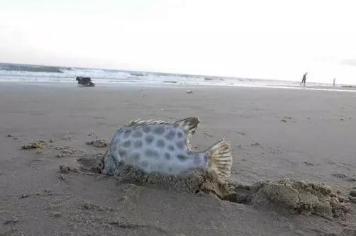 阿里能让锤子这条咸鱼翻身吗?