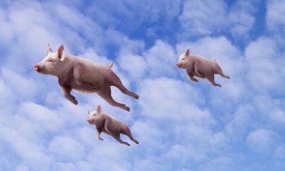 马云动物园开张,阿里旅行改名飞猪,2年千亿想碾压携程?