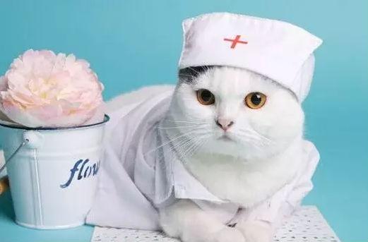 互联网医疗是座大金矿,宠物医疗也如此