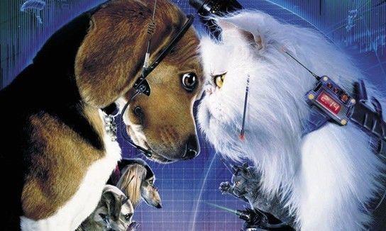 荣耀超级品牌日:一场没有硝烟的猫狗暗战